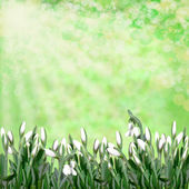Snowdrops on green abstract background — Stock Photo