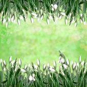 подснежники на зеленый абстрактный фон — Стоковое фото