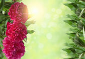 Frame of red flowers and green leaves on a green background — Stock Photo