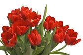 Spring bouquet of tulips — Stock Photo