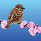 Sparrow on a branch of cherry blossoms - vector illustration — Stock Vector