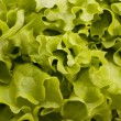 Salad leaves — Stock Photo #18018411