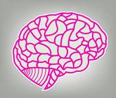 Brain model. EPS10 illustration — Stock Vector