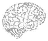 Hersenen model. eps10 afbeelding — Stockvector