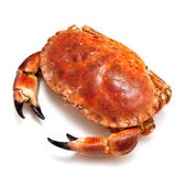 Edible brown crab isolated on a white studio background. — Photo