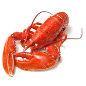 Cooked European common lobster — Stock Photo