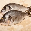 Sparus aurata fish — Stock Photo