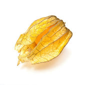 Physalis fruit — Foto Stock