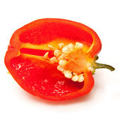 Scotch bonnet chilli — Stock Photo