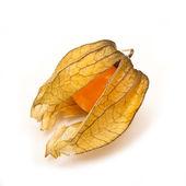 Physalis fruit — Zdjęcie stockowe
