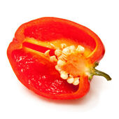 Scotch bonnet chilli pepper — Stock Photo