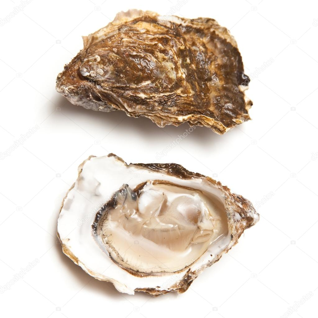 fresh alive oysters � stock photo 169 west1 16955383