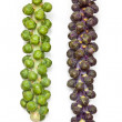 Brussel sprouts on the stem or stalk — Stock Photo