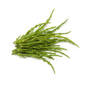 Samphire isolated on a white studio background. — Stock Photo