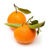 Clementine's isolated on a white studio background. — Stock Photo