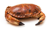Cooked brown crab — Stock Photo