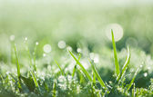 In the dewy grass — Stock Photo