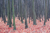 Autumn deciduous forest — Stockfoto