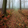 Autumn mist in a leafy forest - Stock Photo