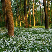 Flowers in the forest — Stockfoto