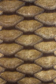 Carp scales — Stock Photo