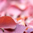 Autumn background with red leaves — Stock Photo