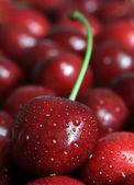 Detailed view of the cherry — Stock Photo
