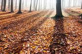 Sombras de árvores na floresta de outono — Foto Stock