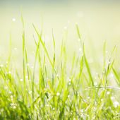 Dewy morning grass — Stock Photo