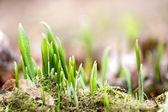 Komst van de lente — Stockfoto