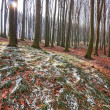 Spring beech forest — Stock Photo #24320377