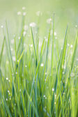 Dew in the grass — Stock Photo
