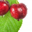 Cherries — Stock Photo #27848287
