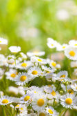 Flowers — Stock Photo