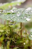 Gotas de orvalho — Foto Stock