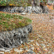 Stock Photo: Drained pond