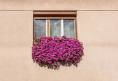 Floral window — Stock Photo