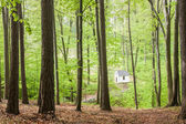 Chapel in beech forest — Stock Photo