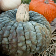 Stock Photo: Bumpy Gray Pumpkin