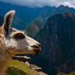 Machu Picchu - Llama with Mountains in the Background — Stock Photo