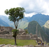 Lone Tree in the Center of Machu Picchu — Stock Photo