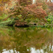 Trees in Fall Color by a Pond — Stock Photo