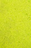 Texture foglia — Foto Stock