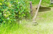 Grass cutting — Stock Photo
