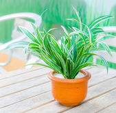 Fake plant — Stock Photo