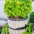 Stock Photo: Tree in the wood vase