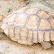 Turtle — Stock Photo #33196663
