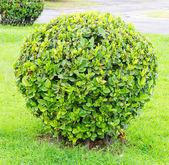 Tree in the garden park — Стоковое фото