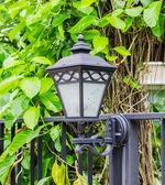 Zwarte lamp — Stockfoto