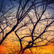 Silhouette tree in twilight time. — Stock Photo